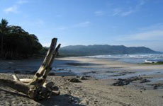 Driftwood on Mal Pais beach
