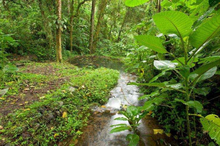 Hotel Los Jardines Costa Rica