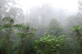 Bosque Nuboso de Montevede inmerso en nubes