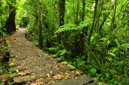 Hiking trail at Monteverde Biological Reserve