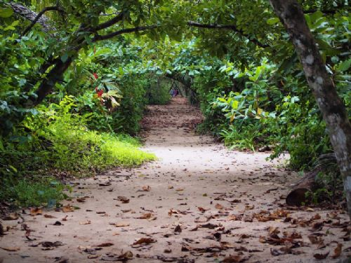 Trail in Cahuita National Park