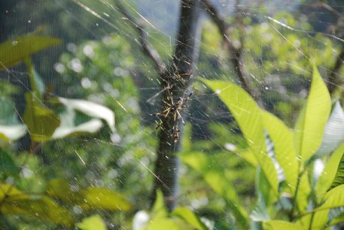 Beautiful Spider on Web