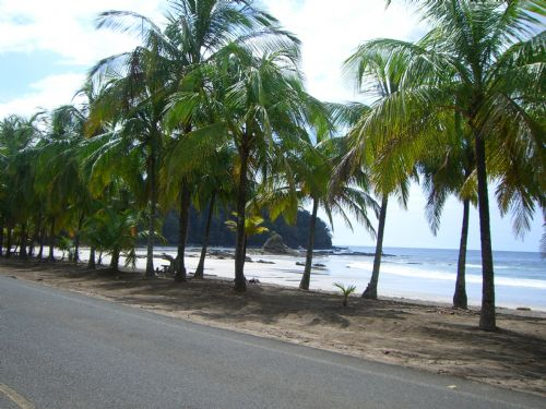 Plam Tree lined beach at Playa Carrillo
