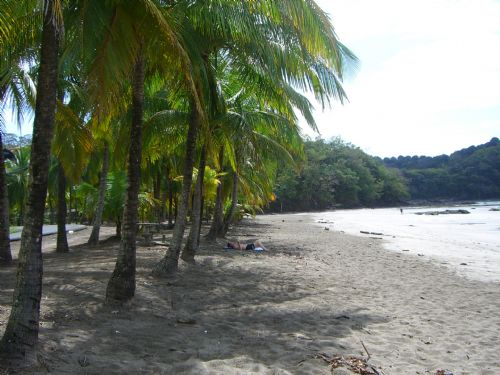 Relax under the palm trees at Playa Carrillo