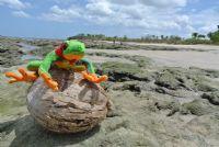 Javi the Frog - Galeria de Fotos