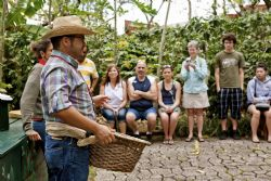 Exploring the traditional method for harvesting coffee