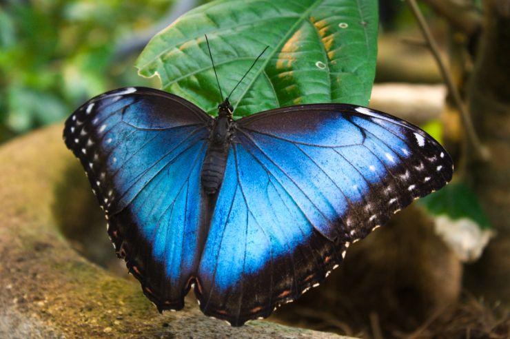 Hermosas Mariposas En Costa Rica Galeria De Fotos Go Visit Costa