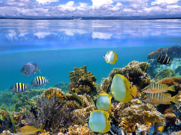 Ver el arrecife del Parque Nacional de Cahuita - Go Visit Costa Rica