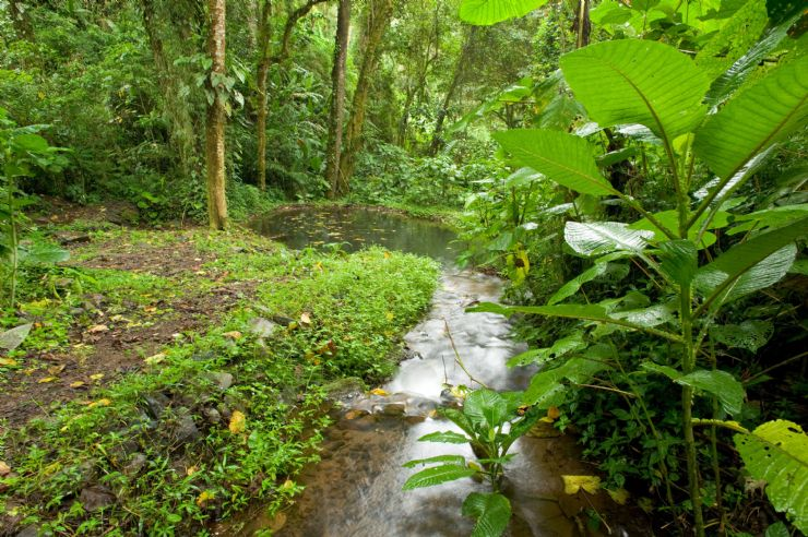 Hermoso bosque tropical en Guapiles