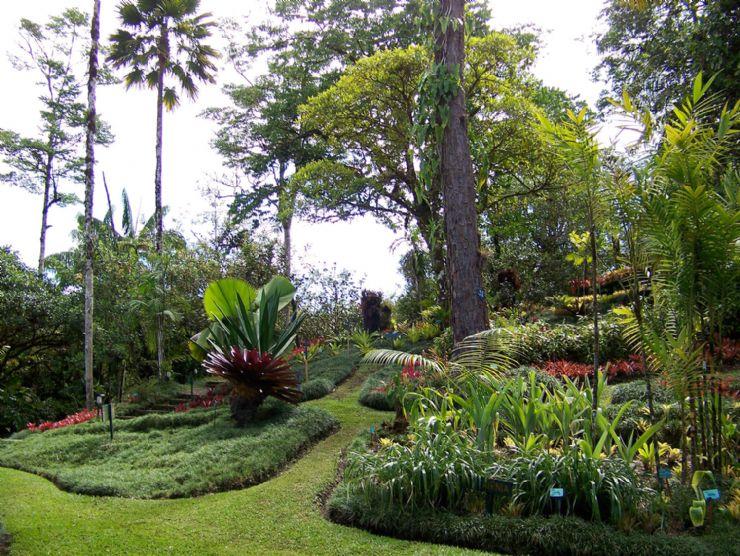 Jardines botanicos wilson go visit costa rica for Botanic com jardin