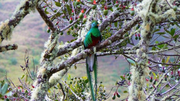 Quetzal spotted at Sueños del Bosque Lodge